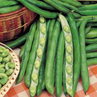 Фасоль овощная Романа изображение 1