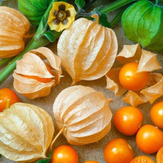 Физалис овощной Золотая россыпь изображение 2