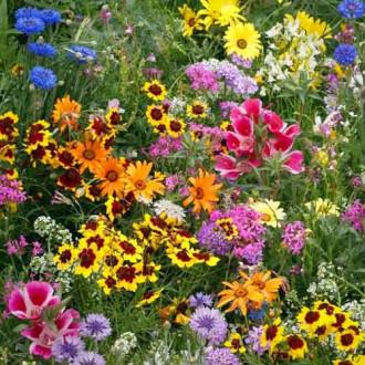 Газон цветущий Солнечная долина, смесь окрасок изображение 3