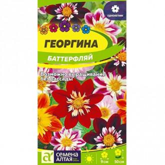 Георгина Баттерфляй, смесь окрасок изображение 8