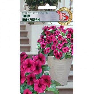 Катарантус розовый (Винка) Тату Блэк Черри изображение 2