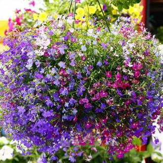 Лобелия ампельная Каскад, смесь окрасок изображение 1