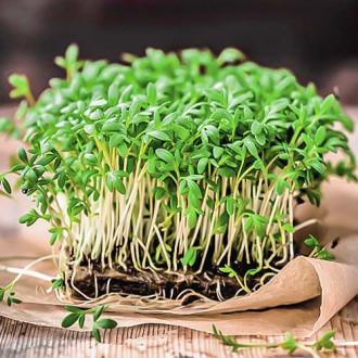 Микрозелень Базилик овощной, смесь семян изображение 8