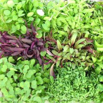 Микрозелень Пикантная, смесь семян изображение 1