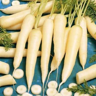 Морковь Карамель сахарная