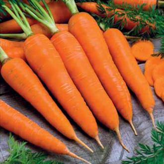 Морковь Королева осени изображение 1