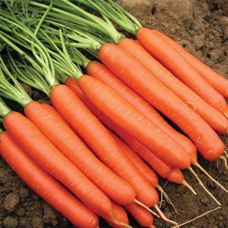 Морковь Красный великан изображение 2