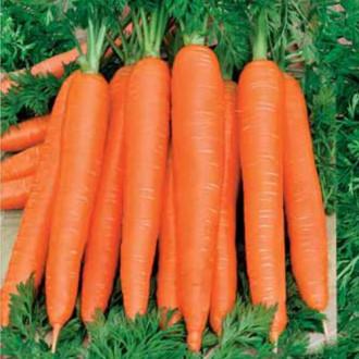 Морковь Осенний король