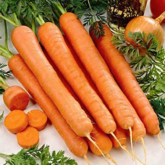 Морковь Русский гигант изображение 5