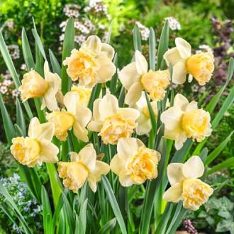 Нарцисс крупноцветковый Арт Дизайн изображение 7