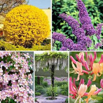 Суперпредложение! Комплект Цветущая изгородь из 5 саженцев изображение 8