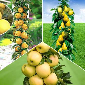 Суперпредложение! Комплект колоновидных деревьев Осенняя удача из 3 саженцев изображение 4