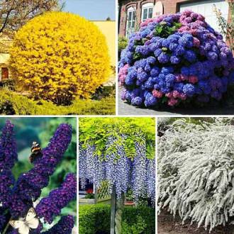 Суперпредложение! Комплект Многолетний сад из 5 саженцев
