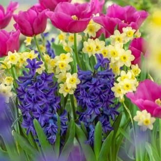Суперпредложение! Комплект нарциссов, тюльпанов, гиацинтов из 20-ти луковиц изображение 6