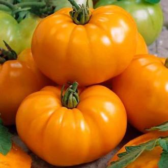 Томат Оранжевый гигант