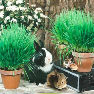 Трава для грызунов Хрум-хрум изображение 1