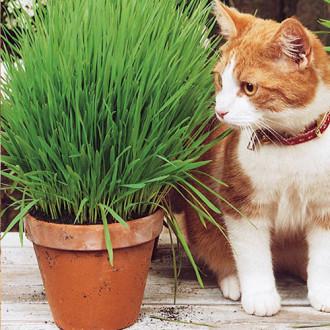 Трава для кошек Скакун изображение 2