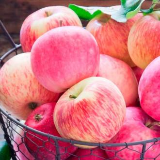 Яблоня Налив розовый изображение 8