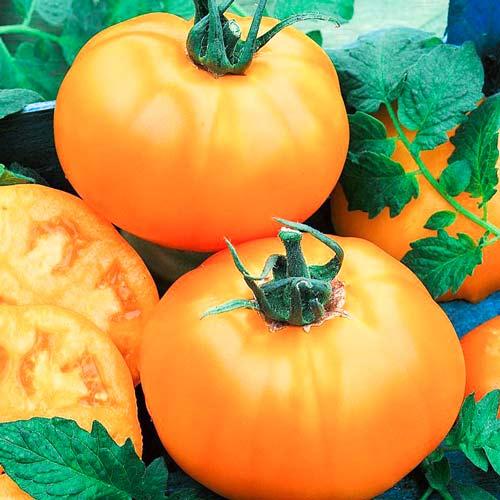 Томат Сахар оранжевый F1 изображение 1 артикул 65172