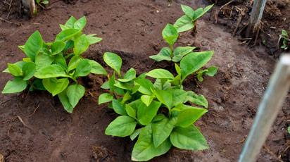 Растения для суглинков