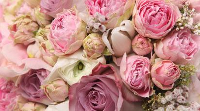Почему не цветут пионы и как это исправить