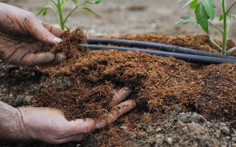 Чем подкормить рассаду огурцов в открытом грунте 91