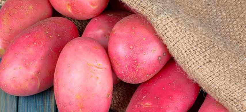 описание, фото и характеристика ранних сортов картофеля фото 1