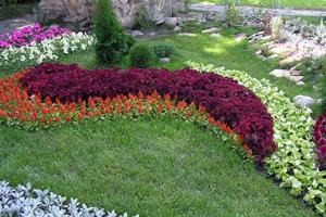 Виды цветников фото 2