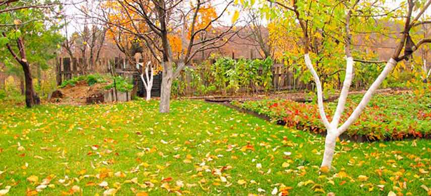 Чем обработать сад осенью, чтобы избавиться от болезней и вредителей |  Полезные статьи на блоге Беккер