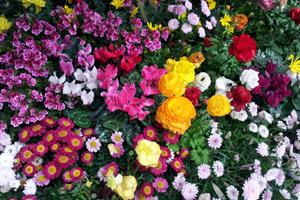 Виды цветниковфото 9
